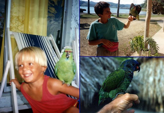 Nos amis les perroquets