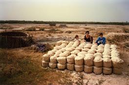 1986 1987 : Sénégal