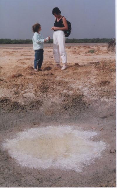 Les salins du Saloum