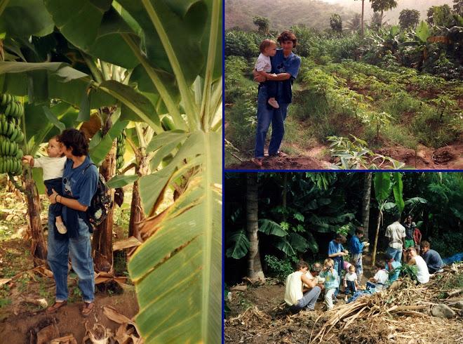 La bananeraie de l'île de Praia