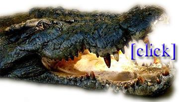 crocs on a plane