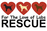 For the Love of the Labs Rescue
