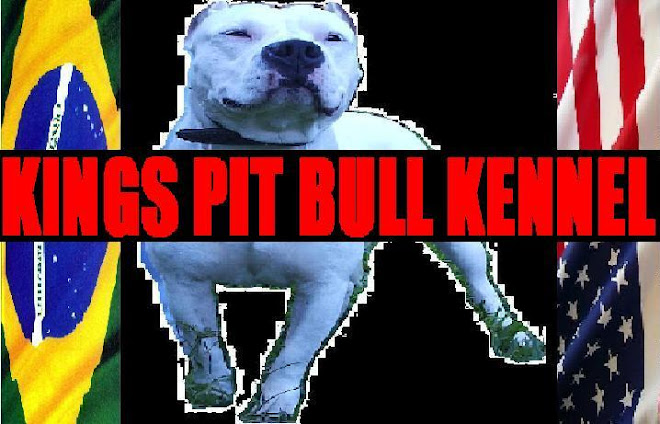 KINGS PIT BULL KENNEL