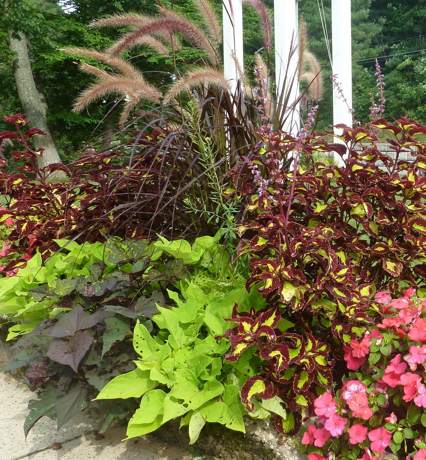 Blooming desert 39 s daily dirt bring color to your landscape for Best plants for desert landscape
