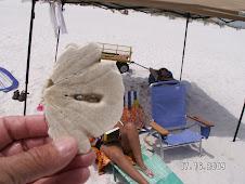 Half a Sand Dollar