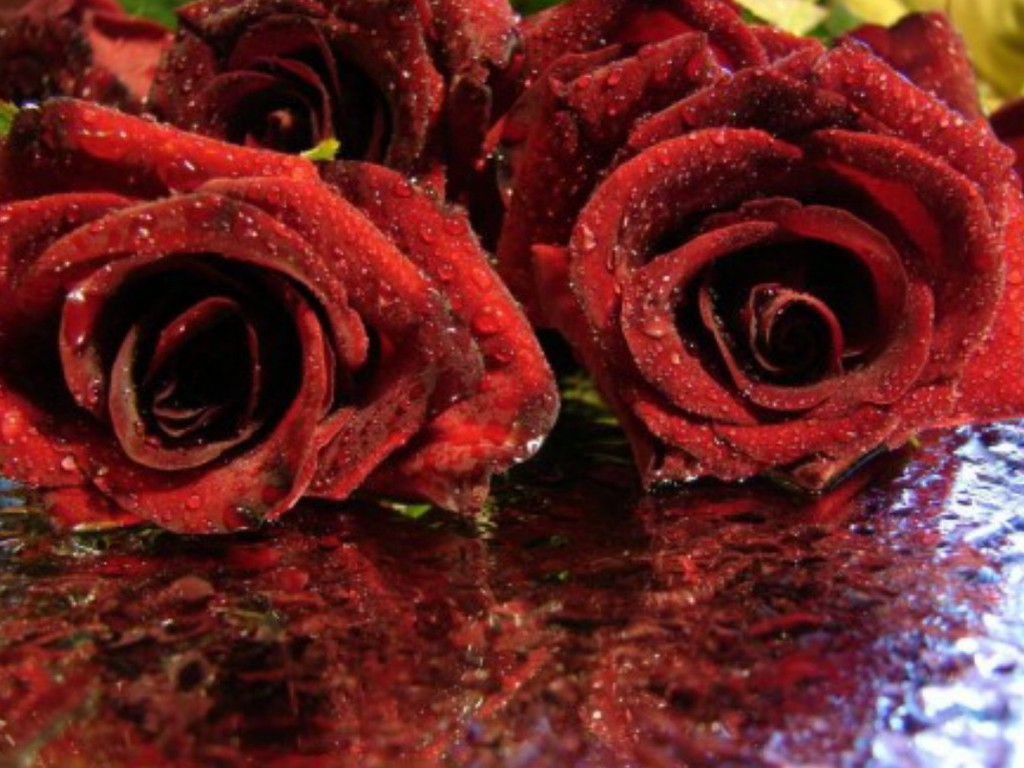 Red Roses Love Wallpapers And Backgrounds Seen On www.dil-ki-dunya.tk