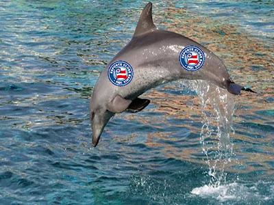 jahia - golfinho
