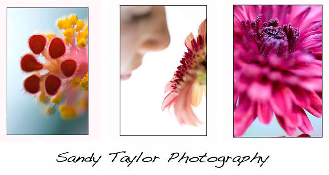 Sandy Taylor Photography