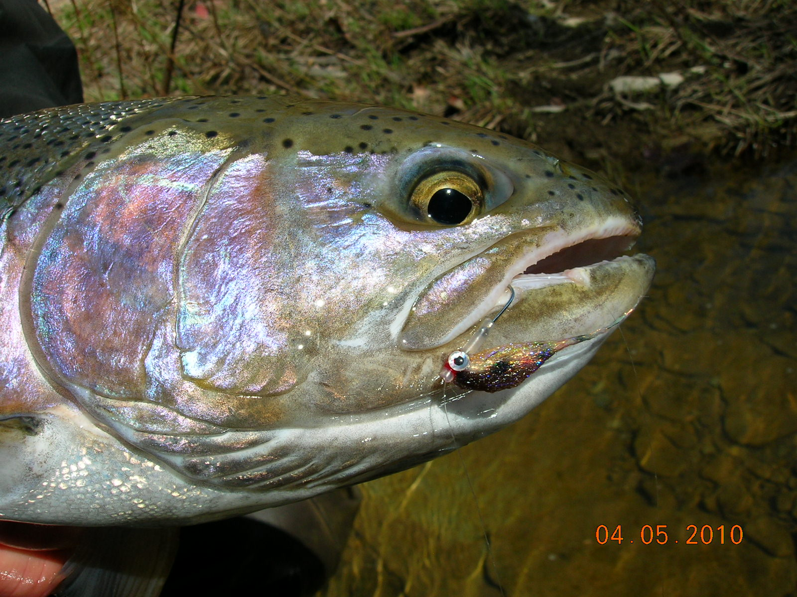 Steelhead alley outfitters lake erie fly fishing guide for Ohio fishing season