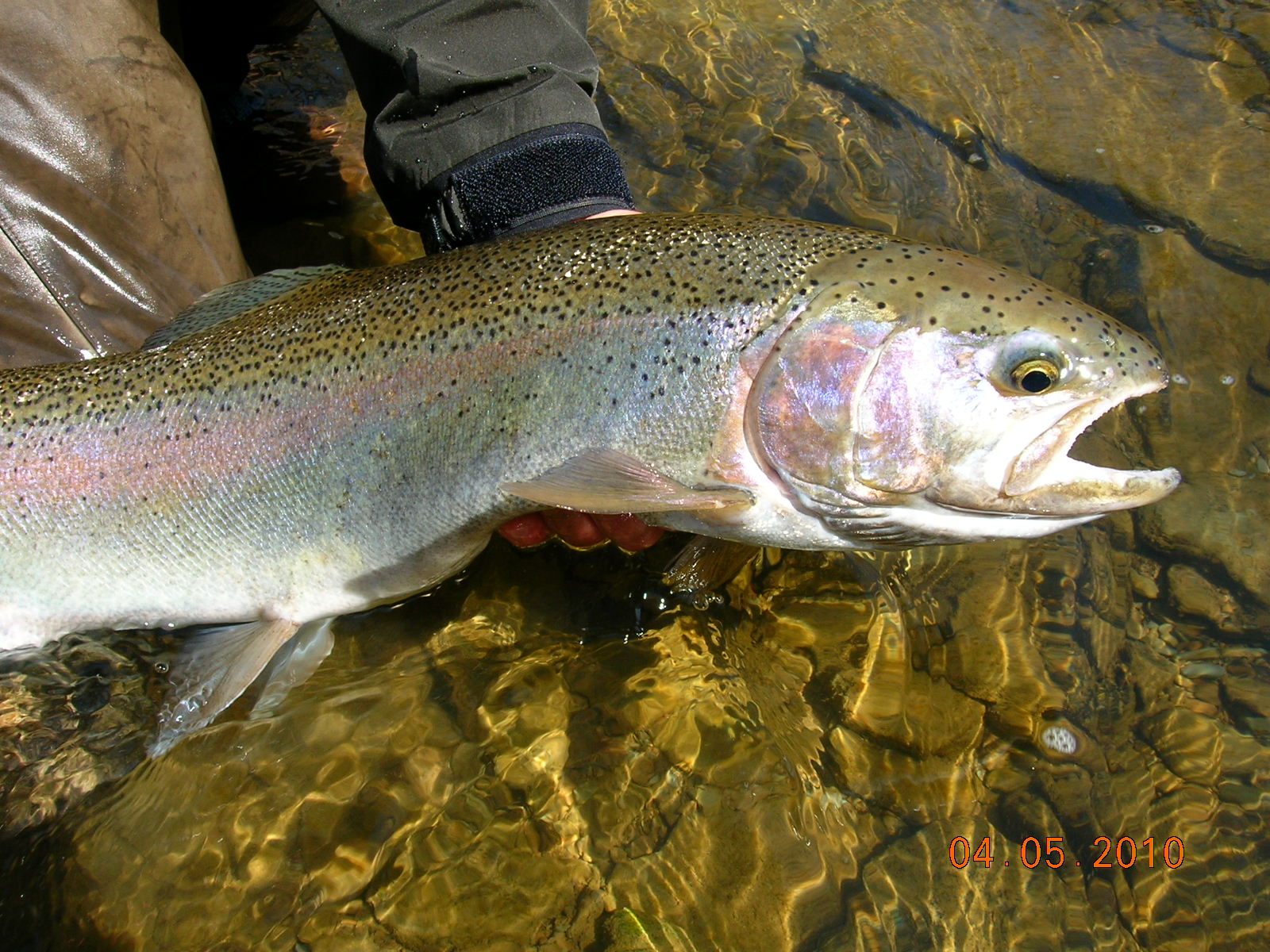 Steelhead alley outfitters lake erie fly fishing guide for Fishing in ohio