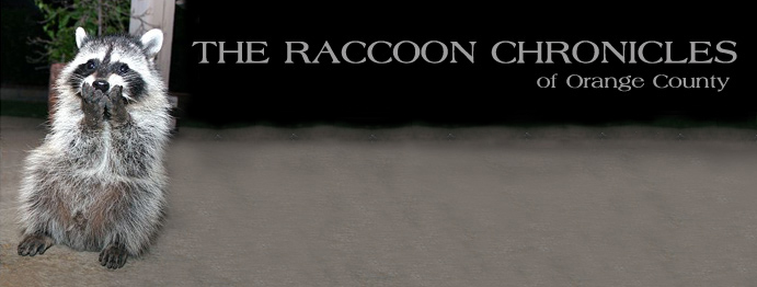 The Raccoon Chronicles