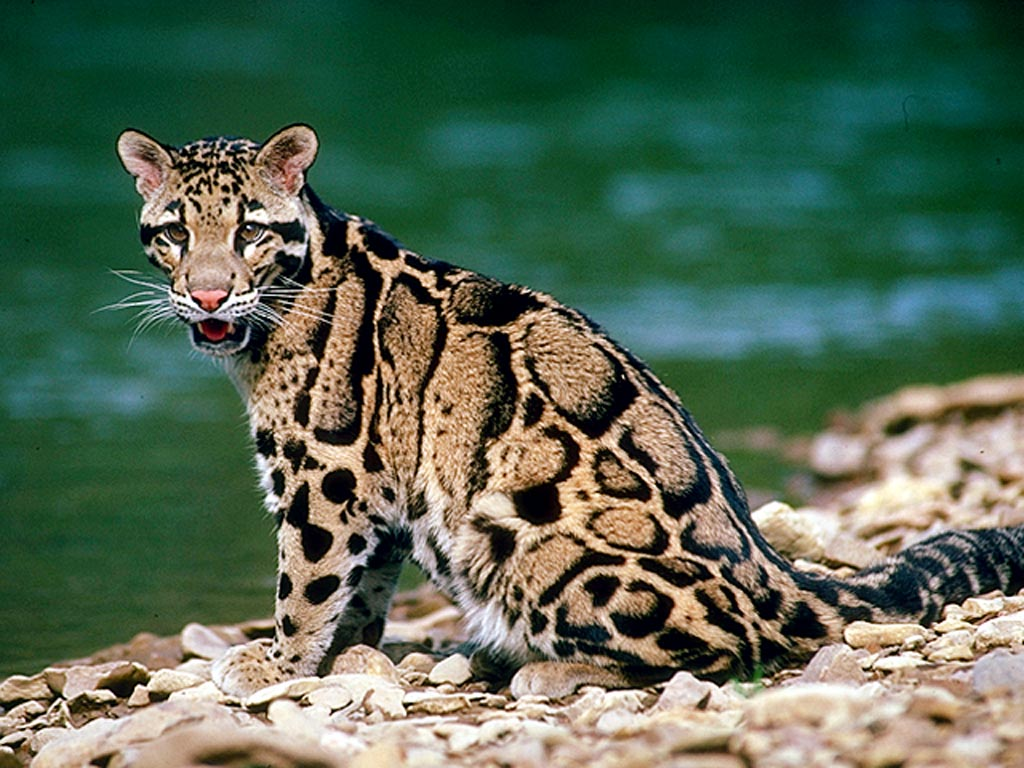 http://2.bp.blogspot.com/_-BuMZ7mvSJk/S9FQK1pLr6I/AAAAAAAAA68/eBzkeEH1pyg/s1600/Animals+(79).jpg