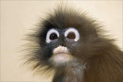 12 - Cutest Animals Pictures