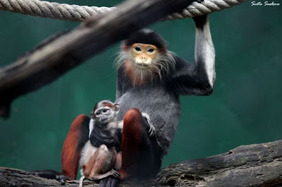 16 - Cutest Animals Pictures
