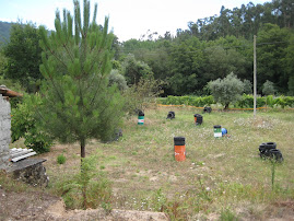 campo de paintball 1