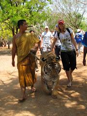 Walking a tiger
