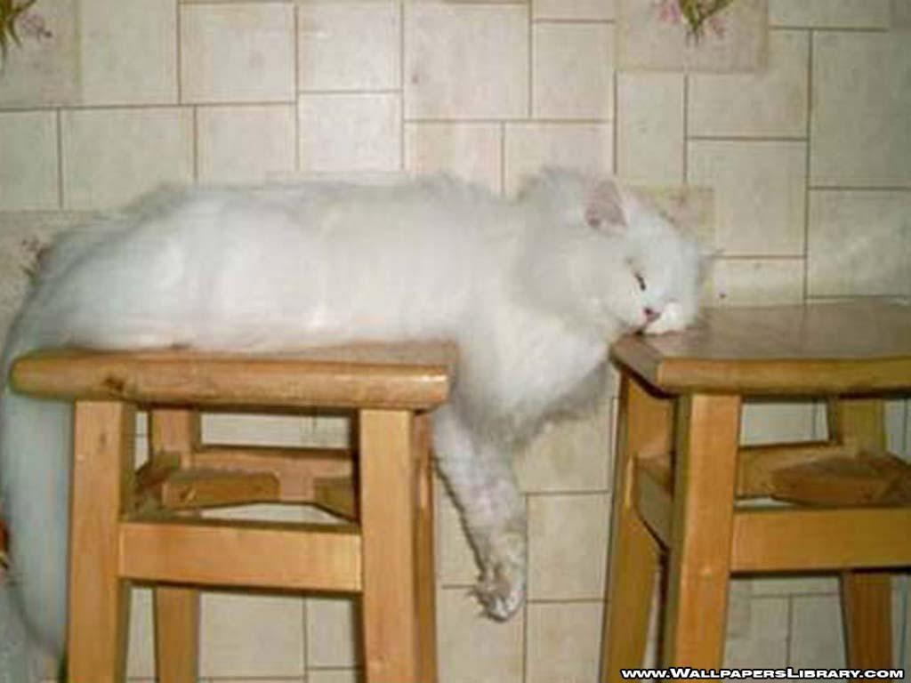 http://2.bp.blogspot.com/_-Dybwa1u0Lg/TJzCnwDjmSI/AAAAAAAAAlE/GDP7BsBFGNM/s1600/sleeping-cat-wallpaper-funny.jpg