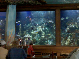 11,500 gallon saltwater tank at the restaurant in the Outdoor World ...