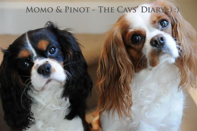Momo & Pinot - The Cavs' Diaries