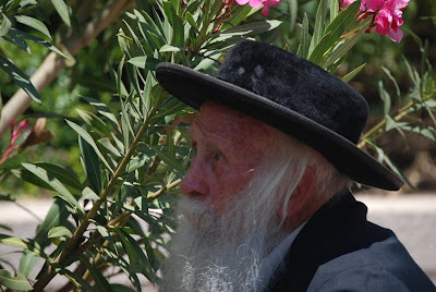 © Shlomit Or 2009 All rights reserved/ A Jewish Orthodox man picks flowers on the street for the celebration of Shavuot in Jerusalem, Israel.