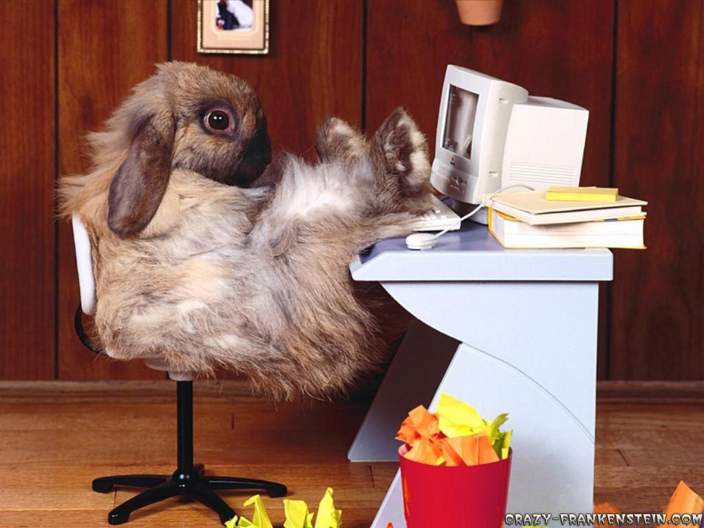 http://2.bp.blogspot.com/_-GsL9HrCQu0/TB9B5Y2HW8I/AAAAAAAAAI8/eiK6Etd0r6o/s1600/funny-wallpapers-rabbit-at-work.jpg