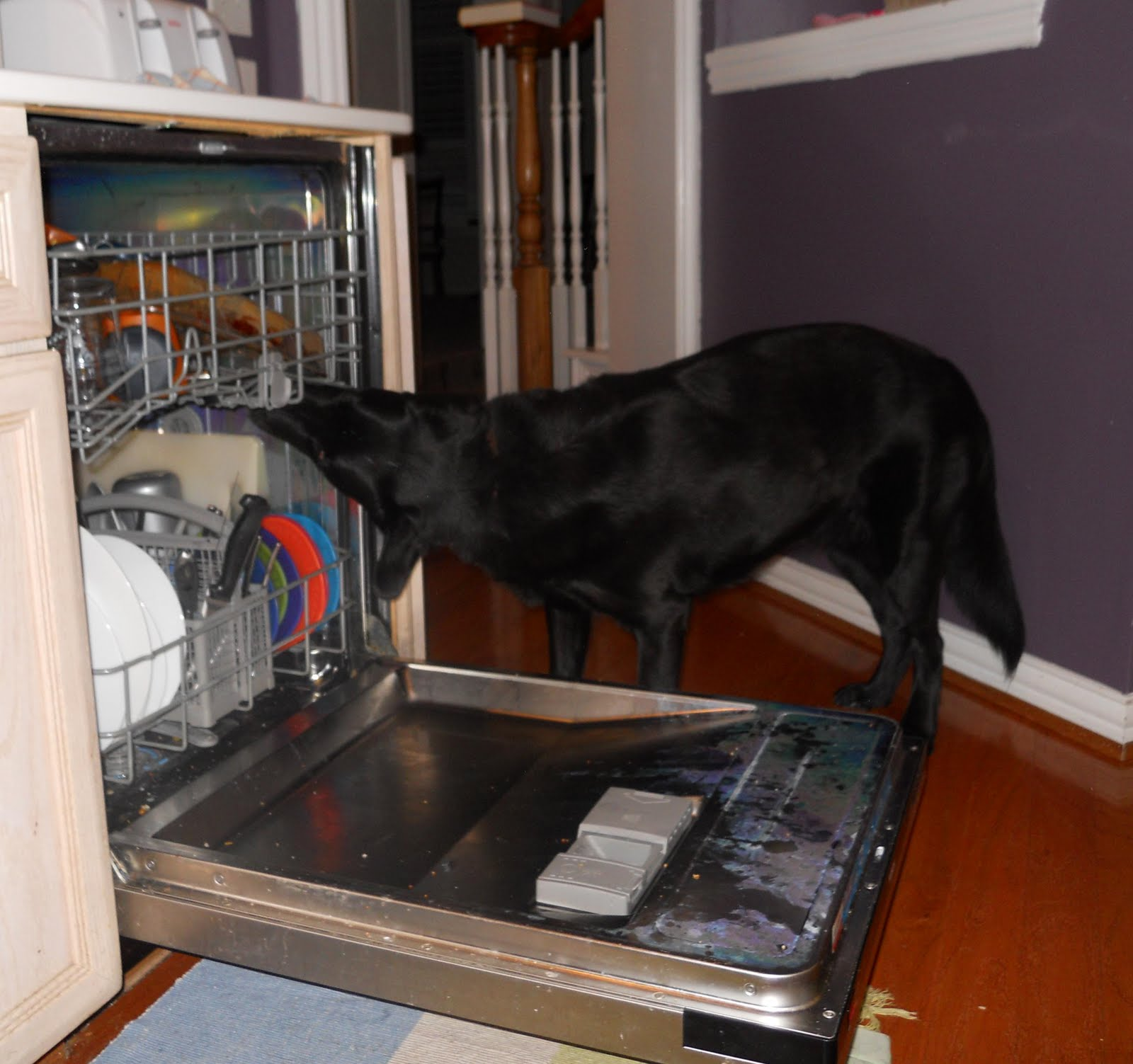 http://2.bp.blogspot.com/_-Ij2NG6N34w/TEkhyfil0FI/AAAAAAAABUQ/eIK9MEuQbcI/s1600/elvis+dishwasher.jpg