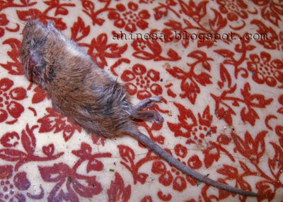 мышиная смерть, мышка