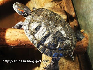 черепаха, гродненский зоопарк, террариум