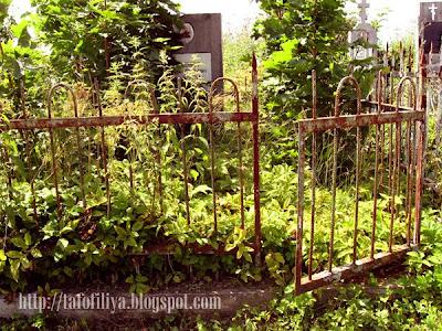 ограда, заброшенные могилы, заросшие могилы, памятники, надгробия, кладбище в Гродно