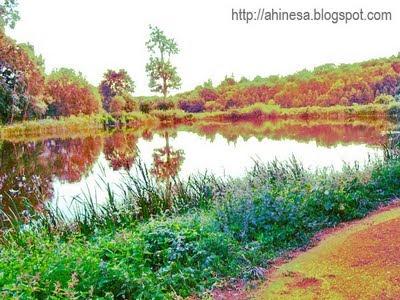 озеро, вода, природа, пруд
