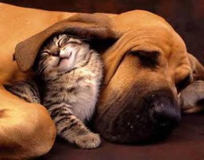 baby animals cartoon. Baby+animals+in+love Cute