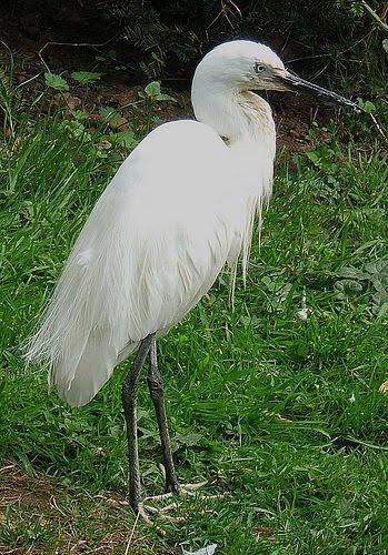 [egret]