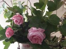 Princesa Nadie me ha regalado estas flores....