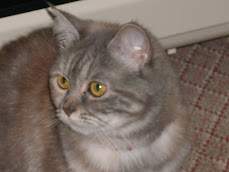Kedim Neko