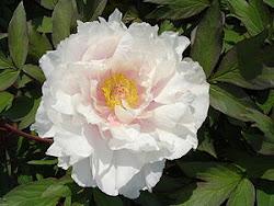 Eine Blume für Leonore
