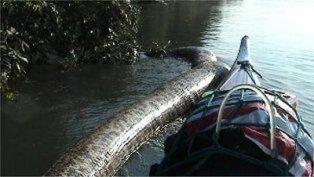 Anaconda Terbesar di Dunia Ditemukan di Amazon (sukmagie blog