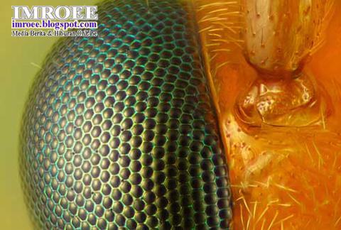 Foto-Foto Keren Yang Tidak Bisa Dilihat Dengan Mata Telanjang - mata tawon