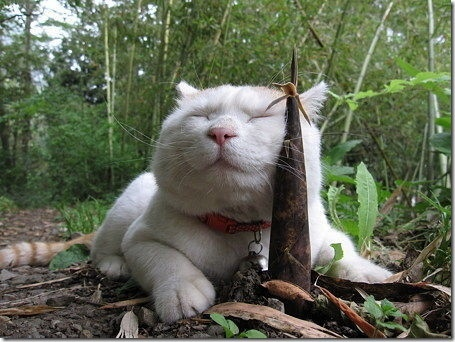 [Image: Kucing+Keren-imut-lucu-menggemaskan-imroee-3.jpg]