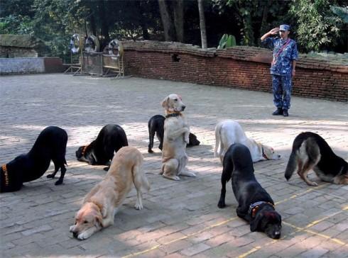polisi memberi hormat kepada anjing anjing itu sangat aneh pastinya