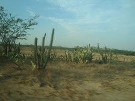 Desierto.Cabo de la vela