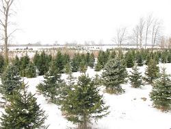 Field of Trees