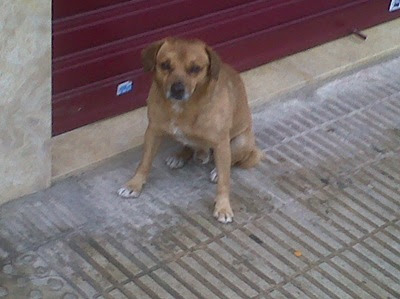 Solo, abandonado, mojado y tiritando de frio, URGENTE!!! Murcia IMG00114-20100213-1259