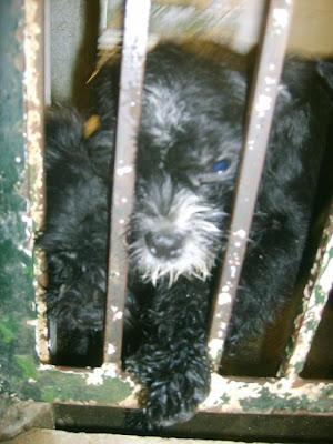 SOS, Perrera de Mairena,, es horrible la cantidad de animales que nos suplican ayuda con sus ojitos S5006907