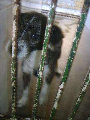 SOS, Perrera de Mairena,, es horrible la cantidad de animales que nos suplican ayuda con sus ojitos S5006914
