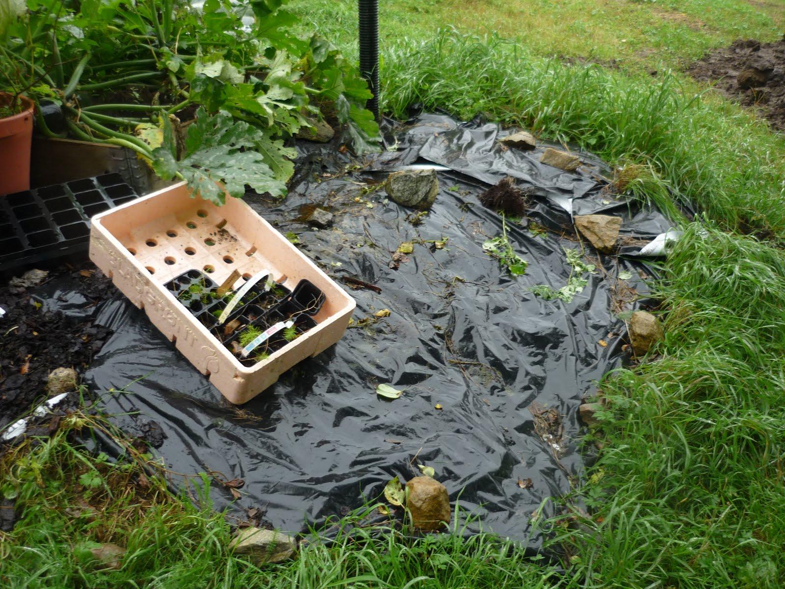 Trädgårdslivet på lindön: november 2010