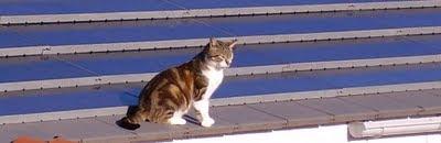 Pupuce prends le soleil sur notre toit !