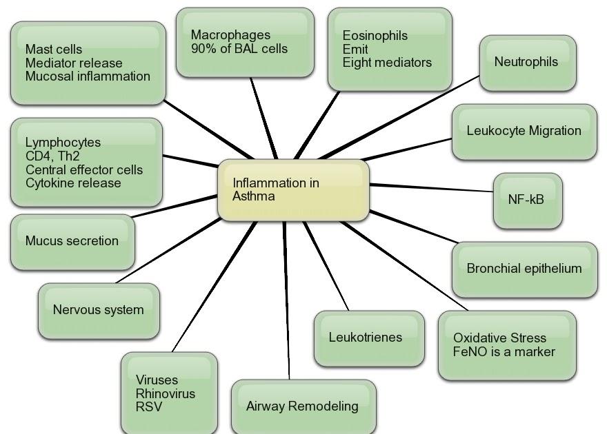 AllergyCases org Mind Maps Asthma