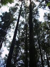 Donde la naturaleza se escucha