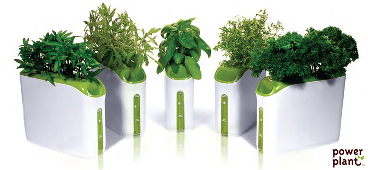 Indoor herb gardens for Design indoor herb garden