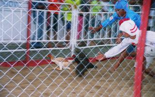 corrida-das-galinhas-pernambuco